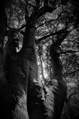 Among Trees (Clive Varley) Tags: silverefexpro2 archive bwstudy
