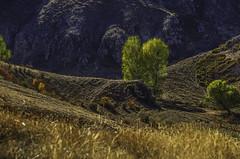 ARMENIA: A hint of Autumn (desimage) Tags: armenia transcaucasianhighway steppes trees light texture cliffs autumn caucasus desimage desgould landscape remote shimmer karahunge