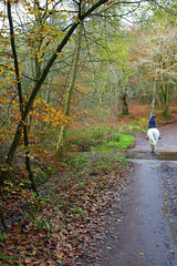 Woodland Lane (Adam Swaine) Tags: broads broadbritain broadsuk woodland lanes trees england english britain british uk ukcounties counties countryside autumn autumncolours autumnviews rural 2019 county countrylanes hants country leaves adamswaine