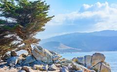 "17-Mile Drive ""Ghost Tree"" Station (parmrussrap) Tags: landscape sea ocean seaside coastal 17miledrive pebblebeach california pacific trees rocks blue landscapes"