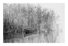 Boat Moored in reeds by the Nile | Esna, Egypt (www.davidrosenphotography.com) Tags: nile boat canoe reeds water egypt