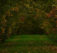 Allée des chouettes (Johan (dreamearth 85)) Tags: saintmartindesnoyers laferrière vendée forêt allée automne automnale autumn herfst nature paysdelaloire forêtdudétroit nikon d7000 tamron natur