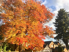 """Autumn BOMB -- ""Incooooooooming!"" 💥 (Halvorsong) Tags: fall fallcolor fallfoliage autumn autumncolor season change seasons wow red orange yellow tree trees leaves color nature projectamerica usa oregon october art composition sky contrast photography outdoor outside roadside spectacle spectacular planet earth explore discover foliage cool wonder"