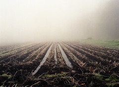 Lost harvest (Ernst-Jan de Vries) Tags: fujifilm400h fuji mamiya mediumformat mittelformat middenformaat film analoog analogue analog c41 colournegative scan epson4490 negative negatief 120 645 filmisnotdead ishootfilm foggy fog mist misty potatoes potato crop fields akker aardappels zetmeelaardappels avebe nat wet agriculture landbouw akkerbouw arealfarming farm farming kartoffel landwirtschaft nass