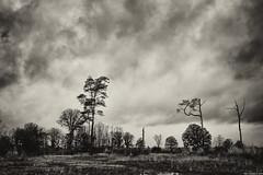 life(less) (Strange Artifact) Tags: bw black white blackandwhite ps acr nik nature heathlands empesetondenseheide clouds scenery landscape tranquil