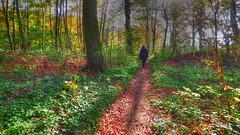 Walk in the Autumn Light (neya25) Tags: walk spaziergang herbst autumn light licht wald forest farbenfroh colorful sunlight sonnenlicht olympusomdem10 mzuiko 918mm schatten shadow
