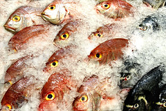 The eyes have it (PentlandPirate of the North) Tags: fish market stall supermarket eyes madeira portugal