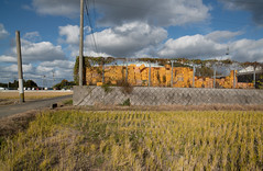 After the harvest. (Yasuyuki Oomagari) Tags: landscape harvest basket yellow cloud fence sunny country countryside container field rural nikon d850 zeiss distagont2821 japan kyushu fukuoka 日本 九州 福岡県 風景写真 agriculture