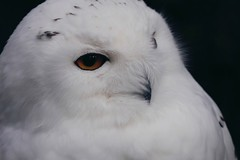 Exceptional Moments (mabumarion) Tags: world moments time being magic snowowl eye feather