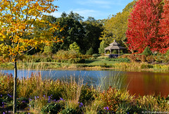The Gazebo at Gold Pond (Jim Frazier) Tags: 2019 20191018cantigny 2019cantigny 3d3layer afternoonlight amazinglight autumn balance beautifullight bluesky botanic botanicgardens botanical botanicalgardens cantigny cantignypark deepdepthoffield diagonals dupage dupagecounty fall fallcolor flora flowers foliage formalgardens framed framing gardenstructure gardens gazebo goldpond horticulture il illinois jimfraziercom lake landscape leaf leaves light loadcode201911 museums nature october parks plants pond preserves publicgardens q4 ruleofthirds scenery scenic sizeover1000 sunny tosave trees triangles water wheaton v1000 v2000 f10 f20 f50 f100 fastpictures explored