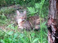 Сиеста (lvv1937) Tags: animalsallkinds allaboutflickrcats photography кошка сад зелень