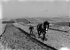 Ploughing the rocks of bawn (National Library of Ireland on The Commons) Tags: tynanphotographiccollection nationallibraryofireland ireland denistynan donegal ploughing horses ploughman furrow field cottage woman ploughshare ulster boy crop