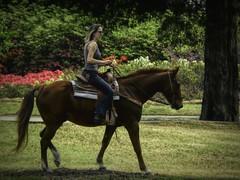 Ride Through the Azaleas (clarkcg photography) Tags: horse woman ride park honorheights gorgeousgreenthursday