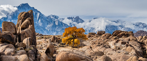 A Lone Tree in the Alabama Hills