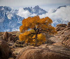 The Lone Tree in Lone Pine, California (RS2Photography) Tags: new winter mountain snow tree fall nature canon flickr natur fresh sierra valley whitney ktla easternsierra rs2photography inyo inyocounty owensvalley smugmug naturephotography cielo ciel weather canon80d sierranevada lonepine california mountwhitney mtwhitney easternsierras sierranevadas cold clouds cloud light colour art colours sky yellow cloudy sierras