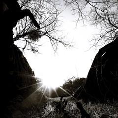 Le soleil se lève pour tous (Un jour en France) Tags: canoneos6dmarkii canonef1635mmf28liiusm soleil soleillevant carré noiretblanc noiretblancfrance monochrome arbre contrejour ombre square oise picardie leshauts defrance sun