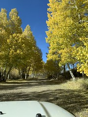Yes please! (A Wild Western Heart) Tags: explore adventure gold yellow fallcolor fall easternsierra jeep wrangler tj