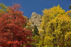Reds and Yellows and Jagged Peaks Around the Timpanogos Cave National Monument (thor_mark ) Tags: alpineloopdrive alpineloopscenicbackway americanforkcanyon aspen aspenleaves aspentrees aspens autumncolors autumnleafcolors azimuth352 blueskies capturenx2edited centralwasatchrange colorefexpro colorofleaves coloroftrees day8 jaggedpeaks landscape leafcolors lookingnorth mountainpeak mountains mountainsindistance mountainsoffindistance mountainside multitudeofplantleafcolors nature nikond800e outside populustremuloides project365 quakies quakingaspen rockymountains stateroute92 sunny talltrees talltreesallaround timpanogoscavenationalmonument trees utahhwy92 utahnationalparks2017 utahstateroute92 wasatchrange westernrockymountains timpanogoscavenationalmonumen utah unitedstates