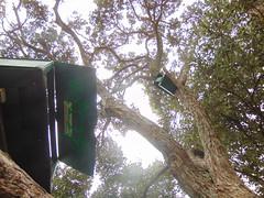 20191128-123151 (LSJHerbert) Tags: auckland castorbay geo:lat=3675626400 geo:lon=17476638800 geotagged milford newzealand nzl 20191128wtk viewranger coast construction housingdevelopment publicreserve tree