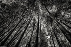 Reach (niggyl :)) Tags: japan temple kyoto shrine inari fujifilm shinto torii nihon fushimiinari fushimiinaritaisha forest landscape grove bamboo bamboogrove samyang xh1 rokinon dxolabs samyang12mmf2 samyang12mm samyang12mmf20ncscs rokinon12mmf20ncscs samyangcsc12mmf20ncscs fujifilmxh1 fujixh1 blackandwhite bw monochrome monochromatic bnw lowkeyblackandwhite silverefexpro silverefexpro2 nikcollection bnwlandscape hat