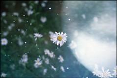 (✞bens▲n) Tags: pentax mzs provia 100f 43mm f19 limited film analogue slide multiexposure screen space stars planet flowers flower