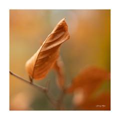 Autumn (Janny.K) Tags: photofacts canonphotography canon6dmark11