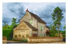 Santenay vigneron, Bourgogne, France (The Two Doctors) Tags: pinotnoir chardonnay france bourgogne burgundy santenay vigneron winemaker wine