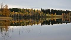 Autumn scene (Stefano Rugolo) Tags: stefanorugolo pentax k5 pentaxk5 smcpentaxda1855mmf3556alwr sweden autumn lake reflection sky water reeds tree landscape