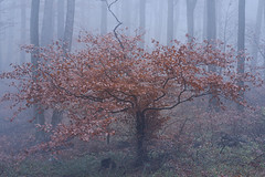 Fog in the Wienerwald (a7m2) Tags: föhrenbergenaturepark perchtoldsdorferheide mödling loweraustria perchtoldsdorf kaltenleutgeben viennawoods wandern joggen hiking travel sport mountain mountainbiking