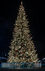 jack london holiday plaza (pbo31) Tags: oakland eastbay alamedacounty night dark black november 2019 boury pbo31 color holidays christmas season jacklondonsquare tree