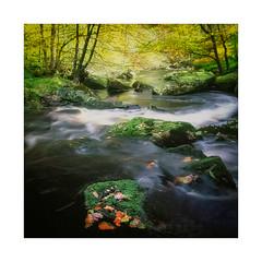 Hardcastle (gerainte1) Tags: yorkshire hardcastlecrags river water trees autumn colour film velvia50 hasselblad501