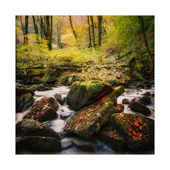 Tumble Down (gerainte1) Tags: hasselblad film portra400 colour trees autumn woodland yorkshire