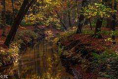 Licht gevangen in de Herbertusbossen/Caught the light in the Herbertus forest (truus1949) Tags: wandelen herfst herbertusbossen licht schaduw reflectie kleine dommel natuur