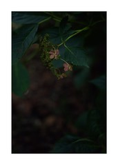 This work is 11/12 works taken on 2019/10/20 (shin ikegami) Tags: sony ilce7m2 a7ii sonycamera 50mm lomography lomoartlens newjupiter3 tokyo 単焦点 iso800 ndfilter light shadow 自然 nature naturephotography 玉ボケ bokeh depthoffield art artphotography japan earth asia portrait portraitphotography