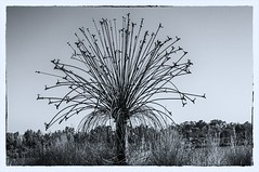 (KlixBNC) Tags: fredandpegs2007australiatrip lake sculpture taps tree water