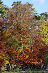 Franchard (hbensliman.free.fr) Tags: travel france forest nature autumn season foliage outdoor pentax pentaxart trees