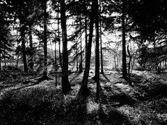 Adopt the pace of nature.......A walk in to the deep dark forest. (gilberteplessers) Tags: nature macro places travel landscape wildlife nationalgeographic water shadows natgeoyourshot yourshot instagram photooftheday nikon yourshotphotographer mercedesbenz mbfanphoto photography nikonphotography photographysouls nikonbelgium nikoneurope nikonartists nikonpost lensculturetalent yourshotnatgeo natgeoyourshotourfotoworld