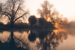 Morning glow - Lakeside (Gruenewiese86) Tags: harz herbst nebel see wernigerode teichmühle morgens fog foggy morning mist