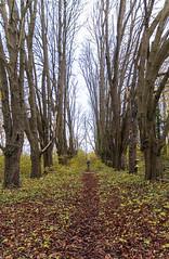 _MG_0253 (laurexpress) Tags: allée arbre sortieovs