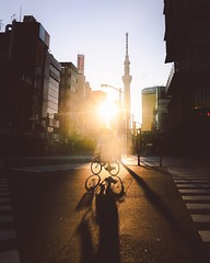 person-riding-bicycle-3250580 (topten5) Tags: architecture asphalt bicycle bike buildings city crossing crosswalk dark dawn downtown dusk evening illuminated light outdoors pavement pedestrian lane road shadow silhouette street sun sunset tower transportation system travel urban zebra