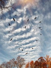 Happy Thanksgiving! (jeanne.marie.) Tags: nature sunshine iphone7plus iphoneography clouds trees heart heartshaped birds november happythanksgiving