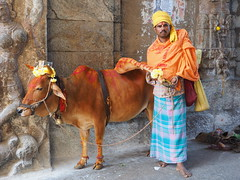 Tirupati - Sadhu with cow (sharko333) Tags: travel reise voyage asia asien indien india tirupati portrait people man sadhu cow hinduisme olympus em1