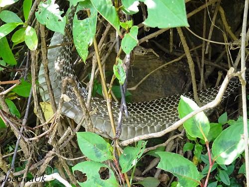 Snake Skin image