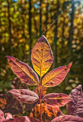 The light was beautiful (@magda627) Tags: autumn goldenhour color nature leaf outdoor fall flickr light garden sun plant edit anteketborkacom closeup trees sony bokeh lightroom detail