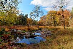 Route du Rapin (hbensliman.free.fr) Tags: travel france forest nature autumn season foliage outdoor pentax pentaxart pod pentaxk1