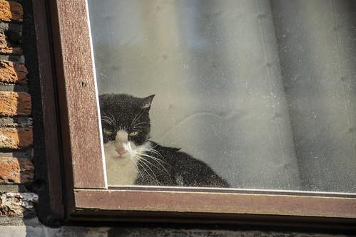 El gato espía