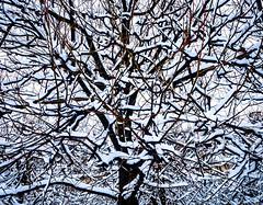 WhiteBranch.jpg (Klaus Ressmann) Tags: klaus ressmann omd em1 abstract fparis france nature placedevoges snow winter design flcnat trees klausressmann omdem1