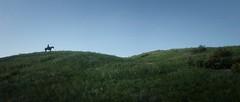 ''The Green Hill'' (HodgeDogs) Tags: hill horse reddeadredemption2 iexplore explore photography fransbouma larahjohnson minimalism games gaming rockstargames