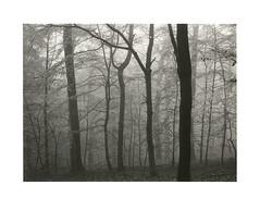 Misty Ville-Wood (Wolfgang Moersch) Tags: fp4 tanol kallitype mt3variotoner hahnemühleplatinumrag