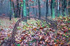 At the end (Dumby) Tags: landscape ilfov românia autumn fall nature colors foliage
